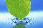caricia del agua
