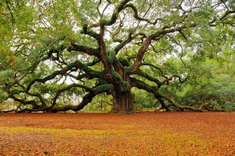 el árbol milenario